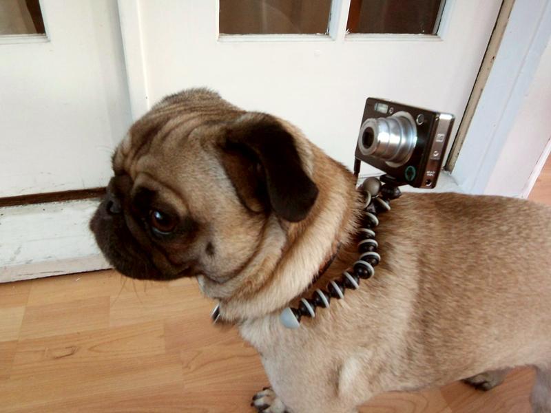 dog-camera